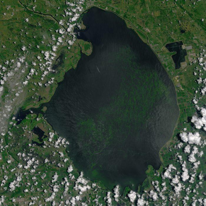A 2016 blue-green algae bloom in Lake Okeechobee. (Photo by Joshua Stevens for the NASA Earth Observatory)