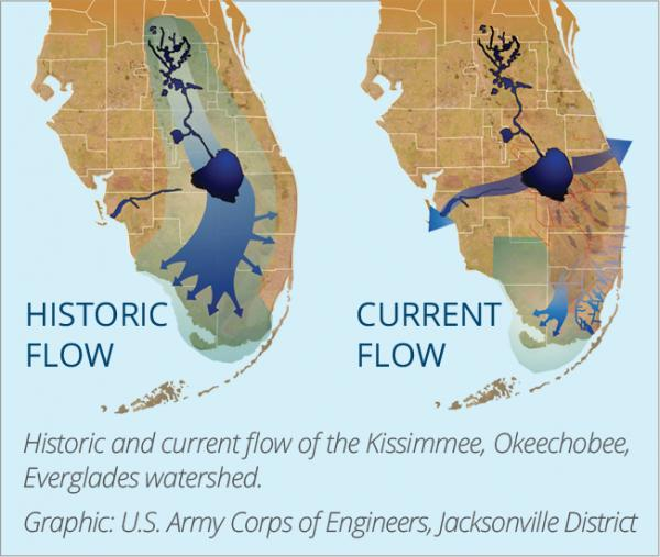 The historic and current flow of the Everglades watershed. (Graphic by the U.S. Army Corps of Engineers)