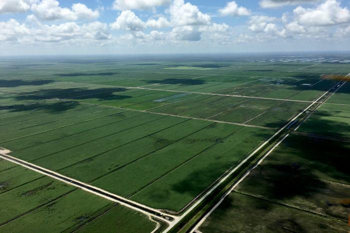Sugarcane fields in Florida