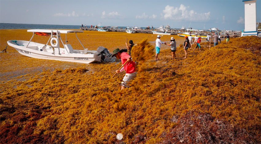 Its decomposition is a serious environmental concern, says marine scientist.