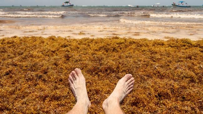 The Sargassum seaweed has destroyed the blue waters of Tulum.