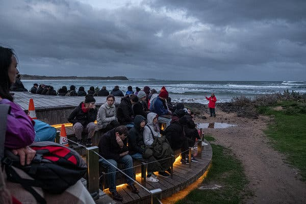 A park ranger speaking to visitors at Summerland Beach, where the penguins approach each evening.