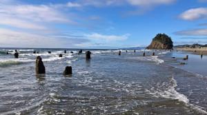 Oregon Coast Ghost Forest - Ancient Tsunami