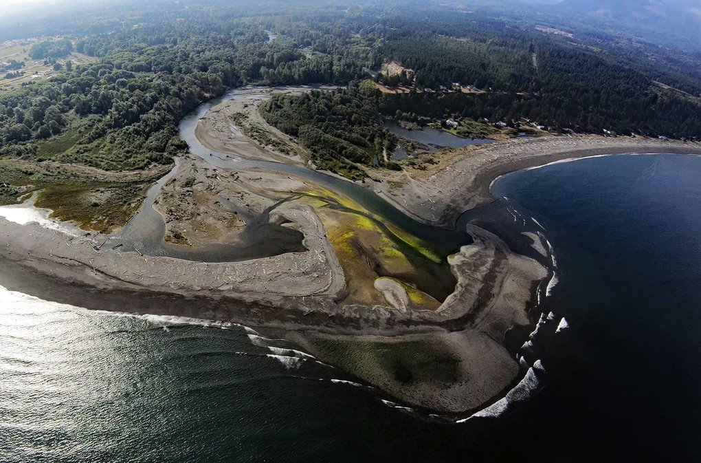Two dams were taken down on the Elwha River beginning in 2011 in the world's largest dam-removal project. Over the next five years, the river unleased carried rocks, sand, silt, and even trees downstream, reshaping more than 13 miles of river and building a large delta in the Strait of Juan de Fuca. (Anne Shaffer and CWI )