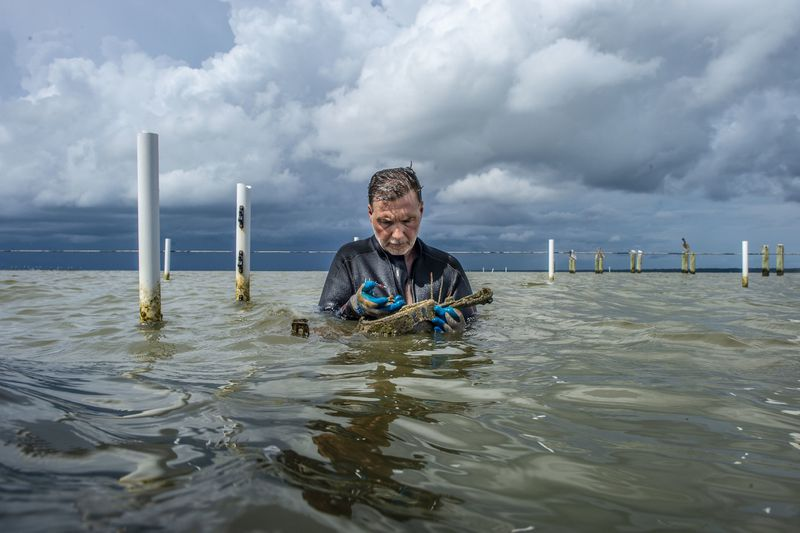 """Auburn University School of Fisheries Associate Professor Dr. William """"Bill"""" Walton looks at the oysters in their floating cages."""