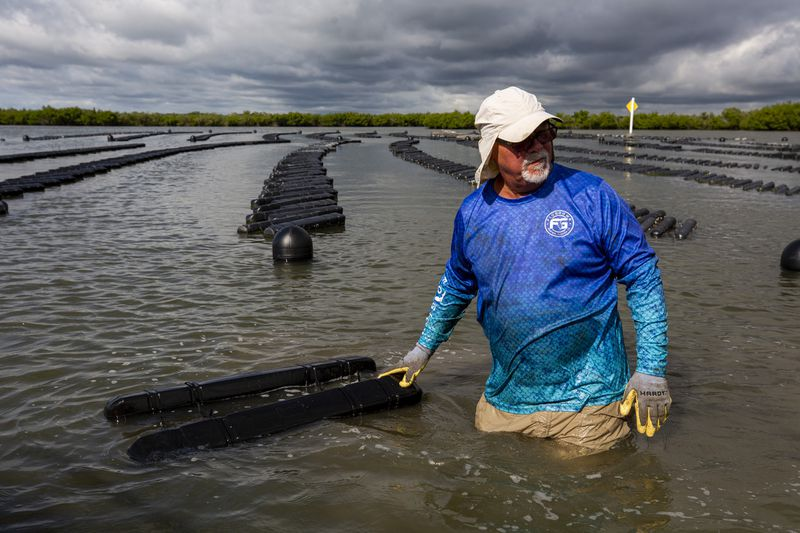 Dennis David, co-owner of IROC Oysters, works on his oyster farm in the Indian River Lagoon.