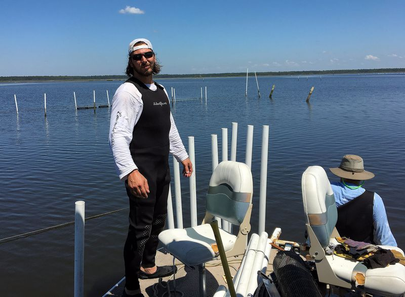 Colin Slemkewicz works the water at Gulf Springs Sea Farm in Spring Creek in Wakulla County.