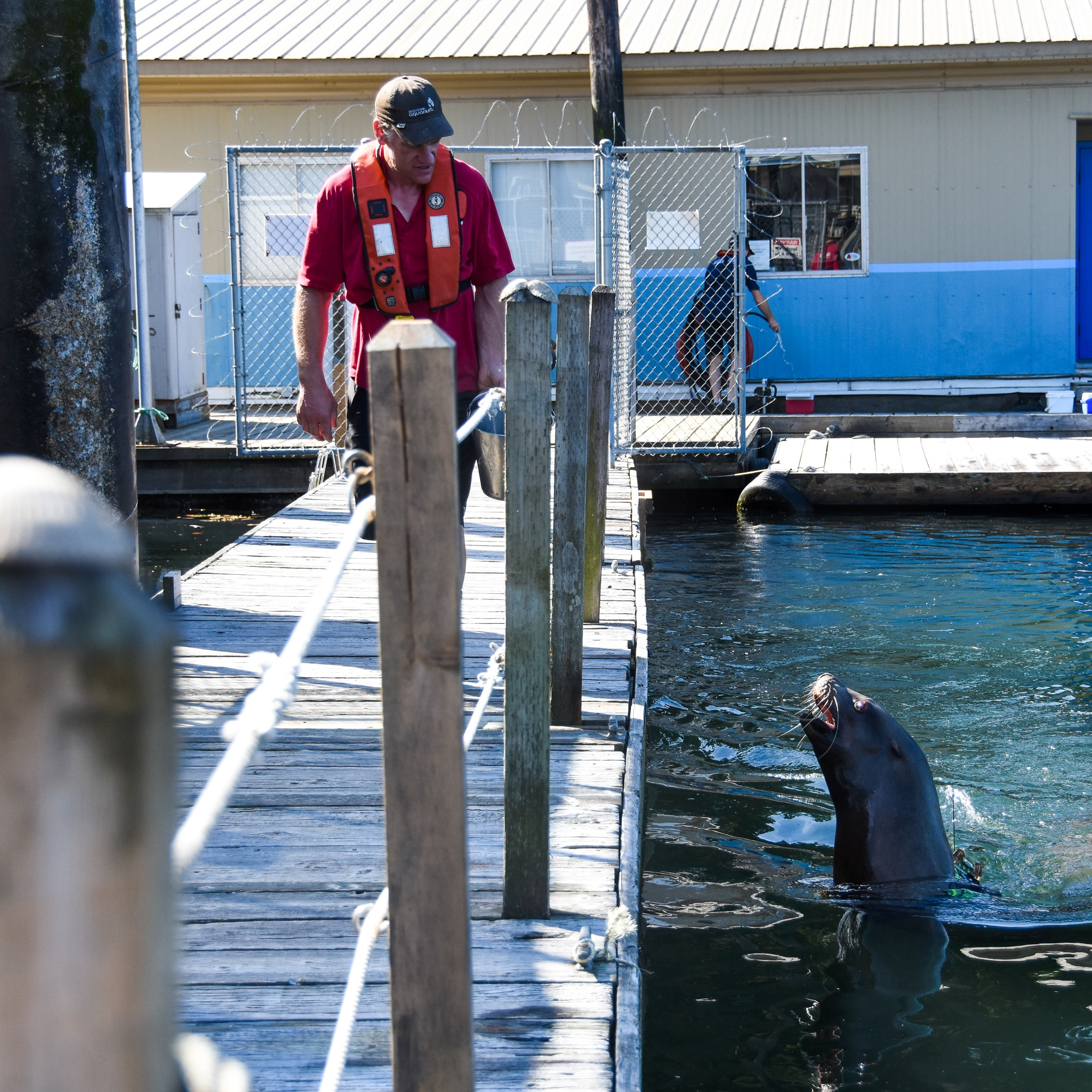 Nigel waller of the Marine Mammal Research Station spends six to eight hours a day training the faci
