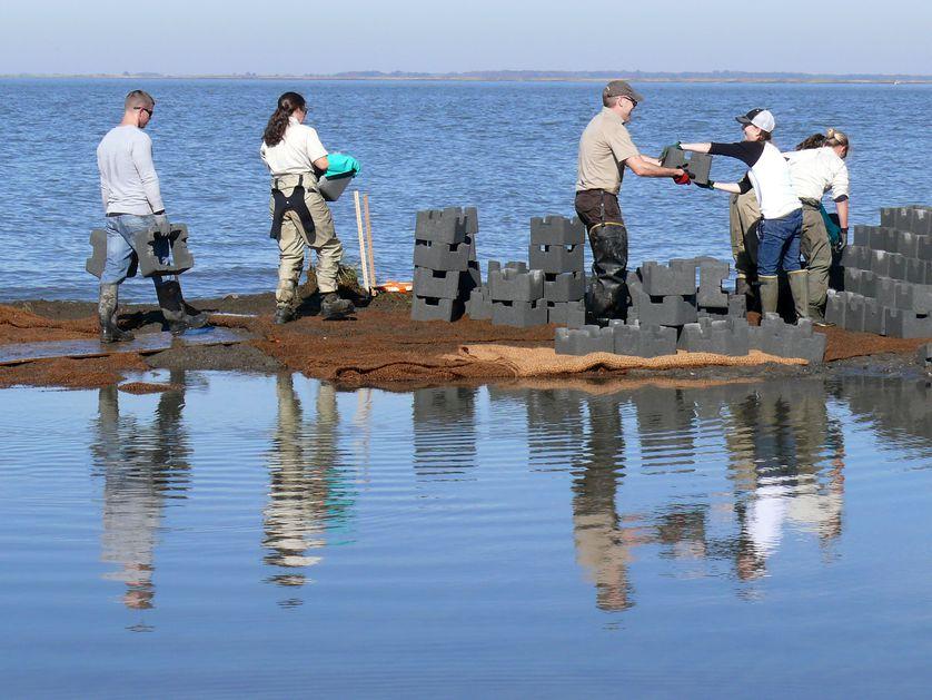 oyster castles, living shoreline, Gandy's Beach, New Jersey