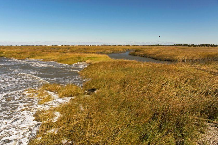 Marsh edge at Gandy's Beach, New Jersey