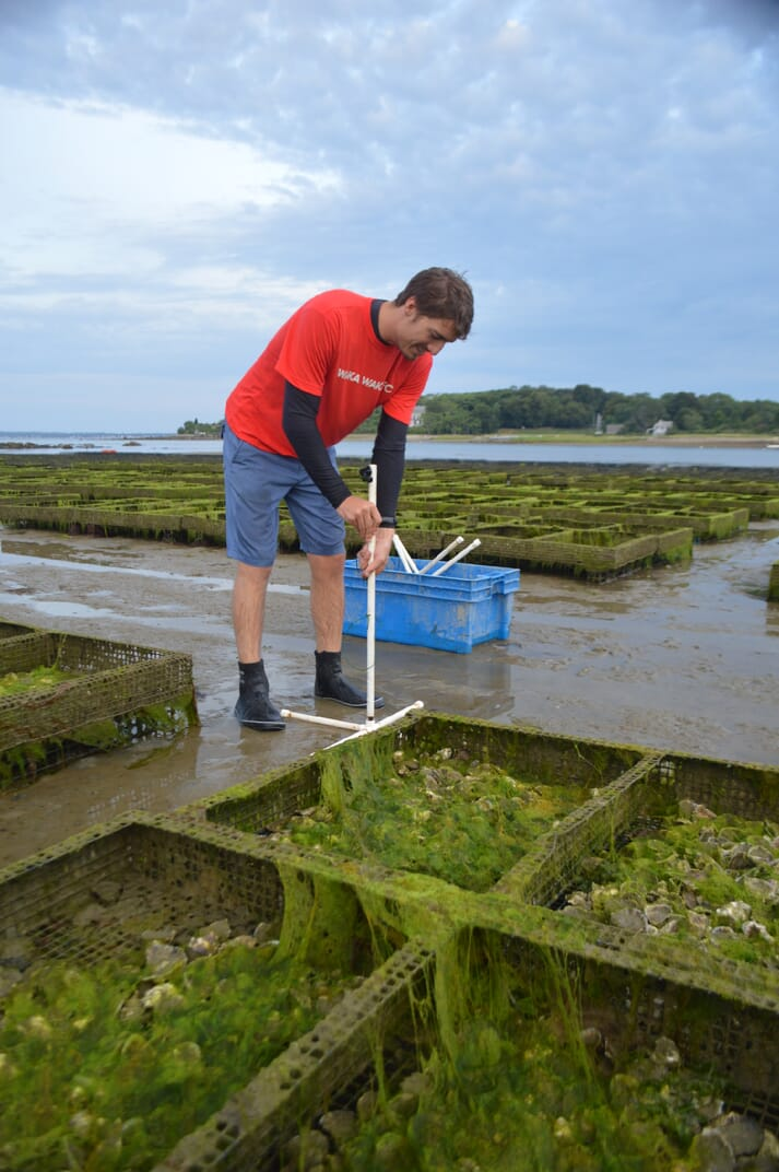 Northeastern University Marine Science Center researcher Forest Schenck sets up a camera to capture underwater video of oyster trays at an Island Creek Oysters farm in Plymouth, Massachusetts