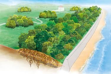 Tsunami mitigation park