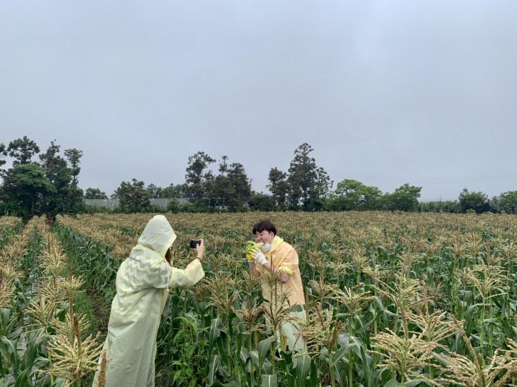 A tourist picks corn at the Mulme Healing Farm.