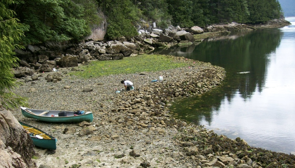 Human-built clam gardens found in the lower intertidal zone are characterized by a level terrace behind a rock wall. Photo: Amy S. Groesbeck