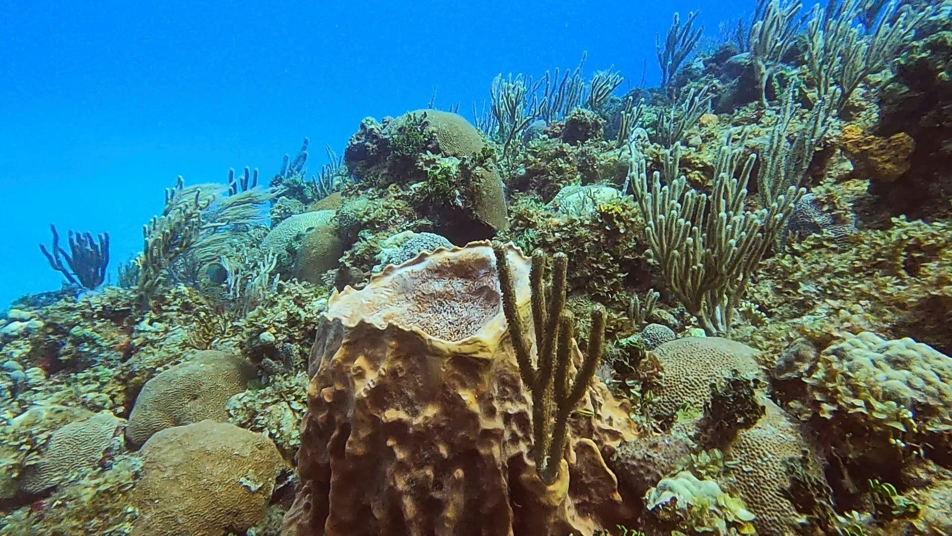 A view of a coral colony on the coast of Havana, Cuba, March 28, 2021. (REUTERS Photo)