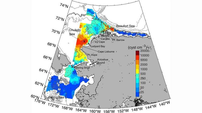 Study finds growing potential for toxic algal blooms in the Alaskan Arctic