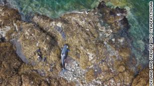 A stranded orca was freed from a rocky coastline in Alaska after being stuck for hours