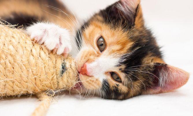 Cuando el gato no usa el rascador