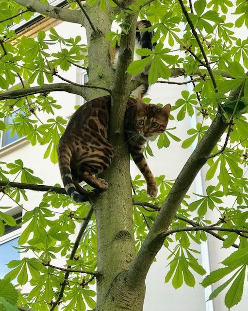 Bajando al gato del árbol