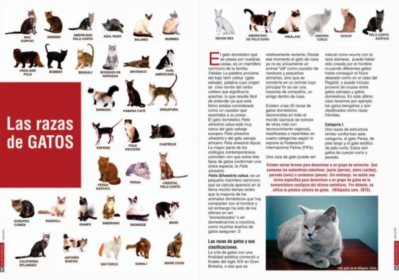 Las razas de gatos.