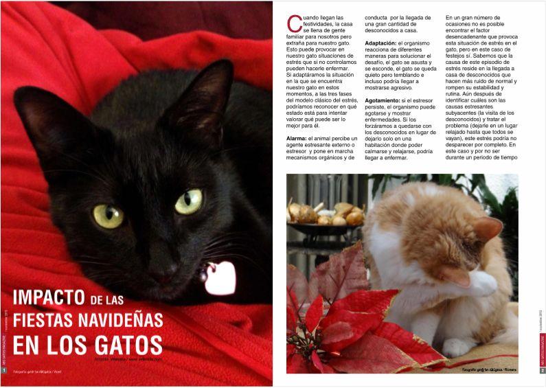 Impacto de las fiestas navideñas en los gatos.