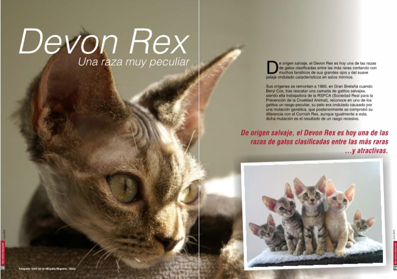Los gatos Devon Rex una raza muy peculiar