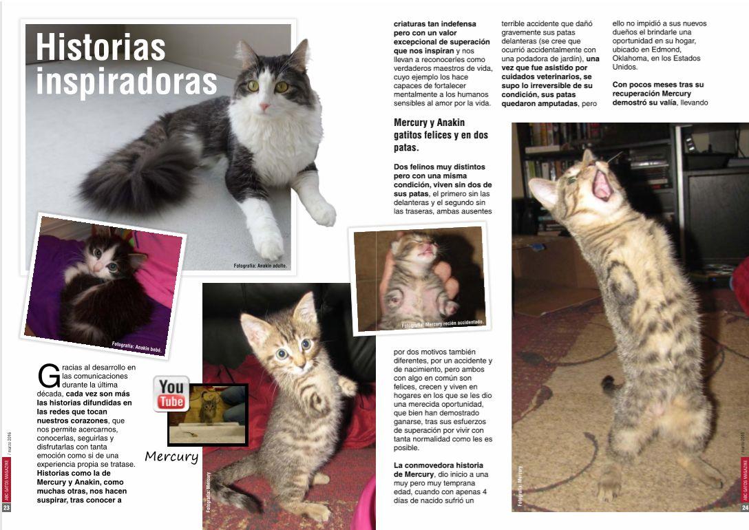 Historias inspiradoras de gatos.