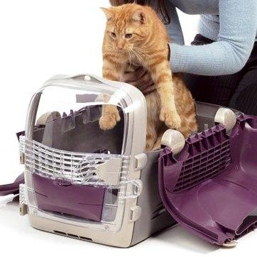 El transportín. Trucos para que el gato entre al transportín.