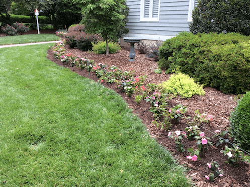 Flowers At Installation by Canopy Lawn Care