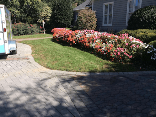 Flowers 20 weeks after installation by Canopy Lawn Care