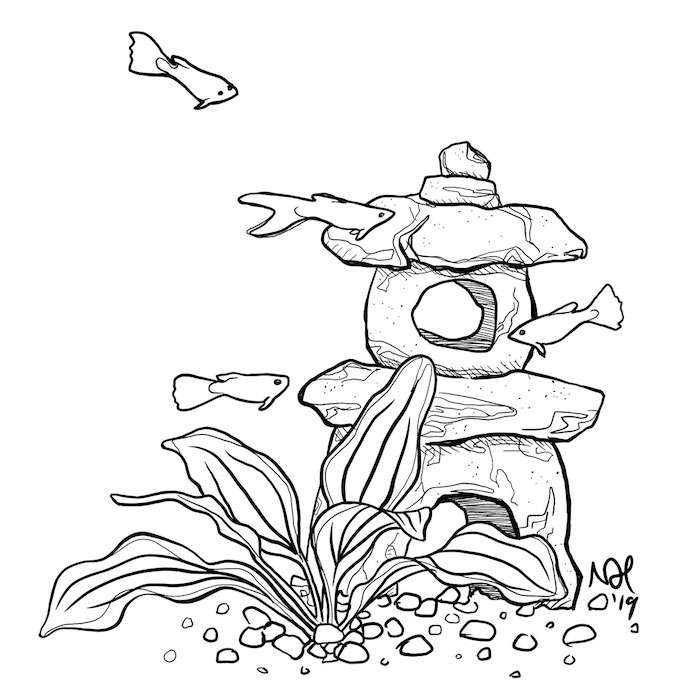 Black and white line drawing of an aquatic plant with guppies swimming around it.