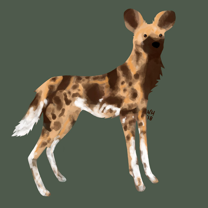 Digital drawing of an African Wild Dog.