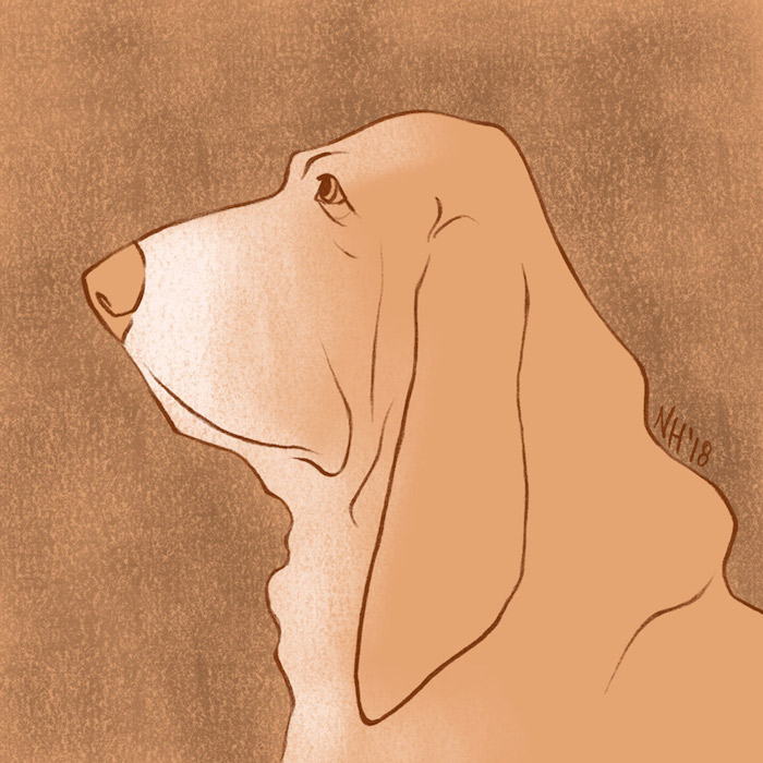 Digital drawing of a basset hound.