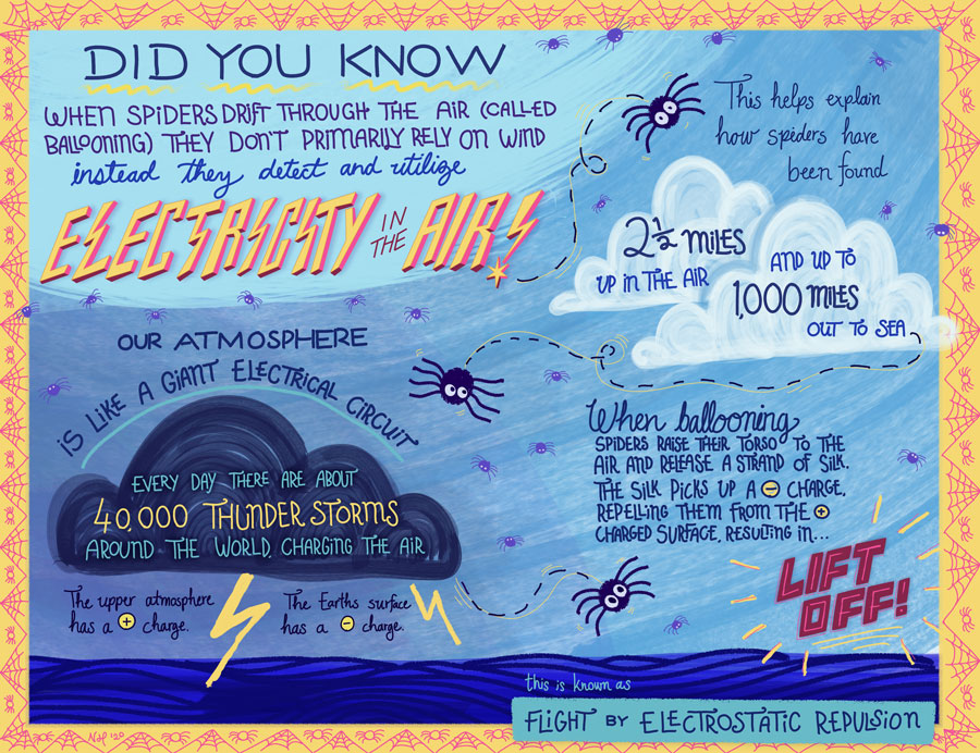 Illustrated infographic explaining how spiders use electricity to fly through the air. The graphic includes many small spiders floating in the air around the text. The full text used in the info graphic is below the image.