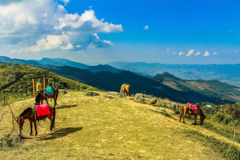 caballos en una caravana en China