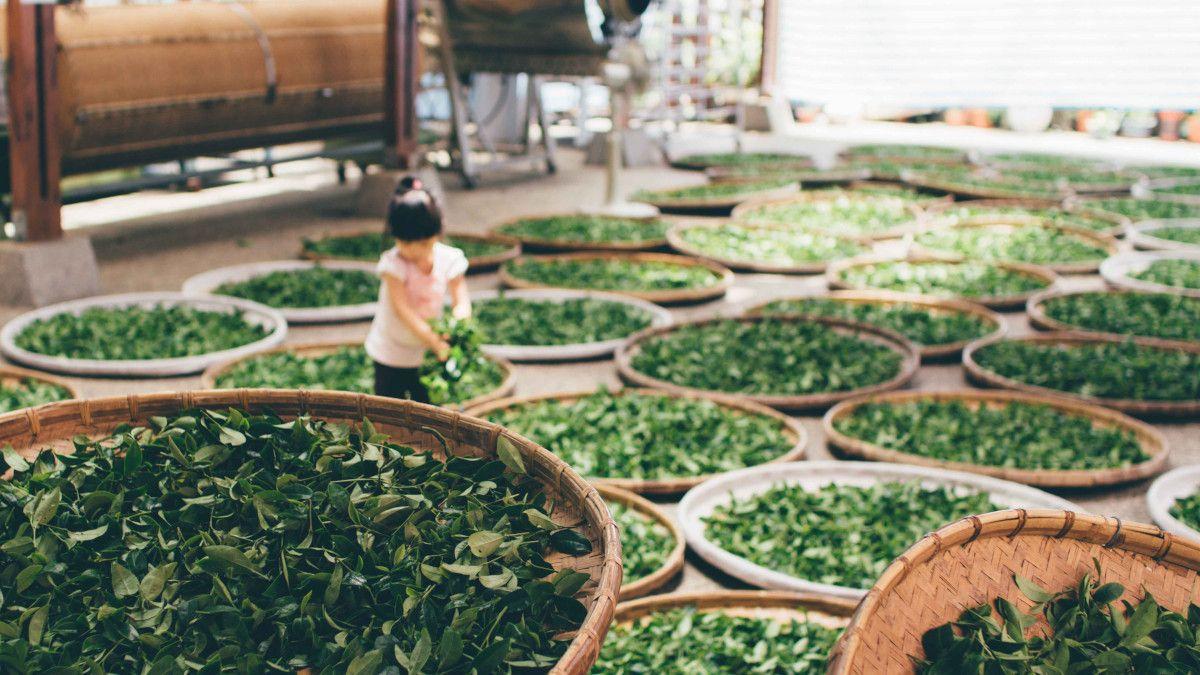 niña elaborando te verde