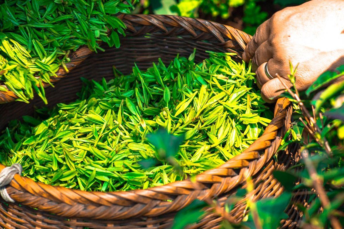 Acelera la pérdida de peso con estos tés para adelgazar