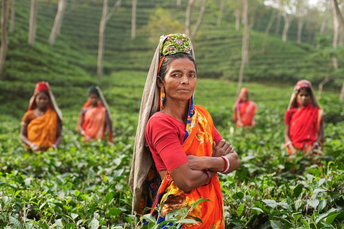 Los tés más raros del mundo