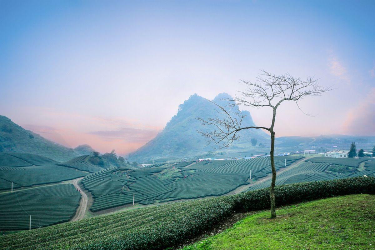 Propiedades del té azul para tu salud