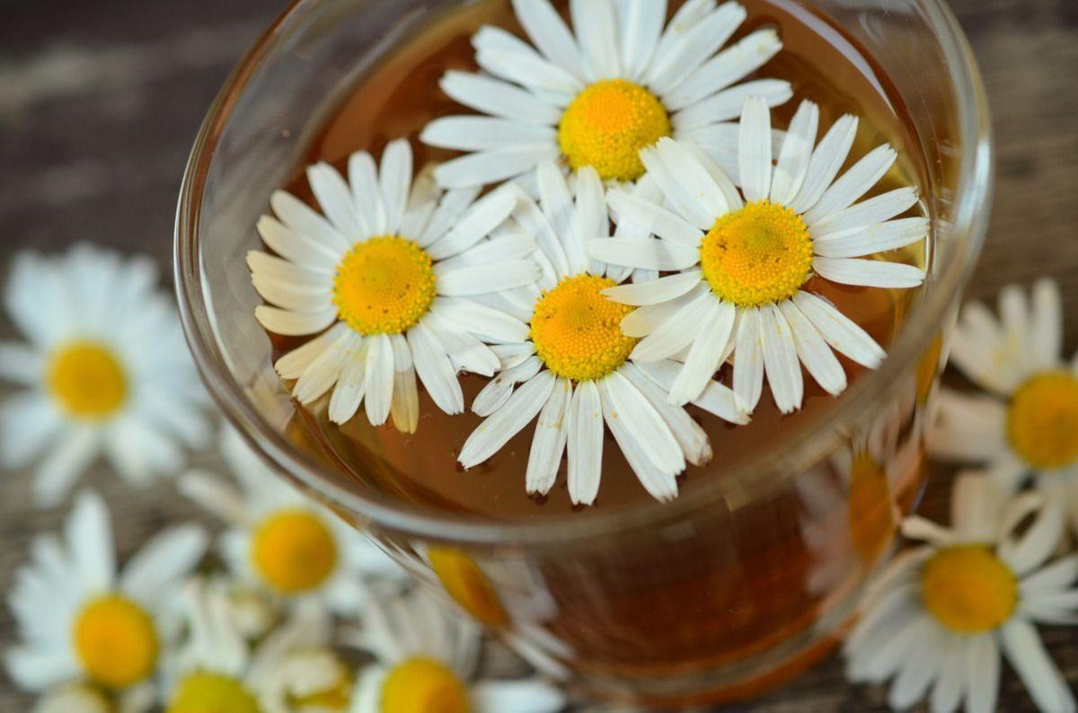 una taza de manzanilla para los nervios