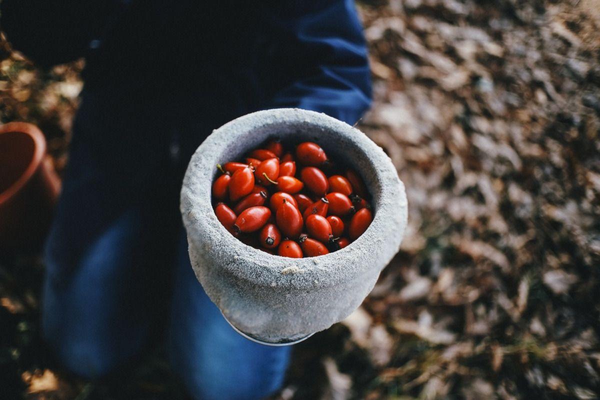 frutos de rosa mosqueta
