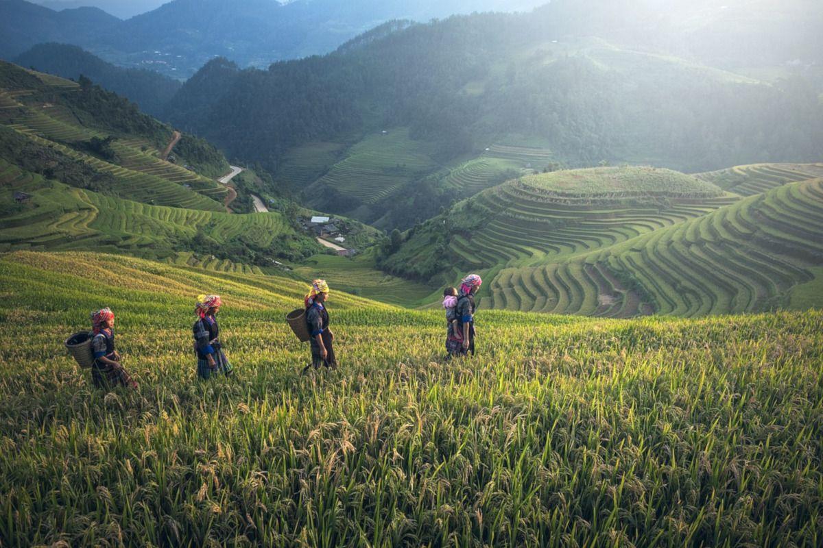 Los secretos del té en Tailandia
