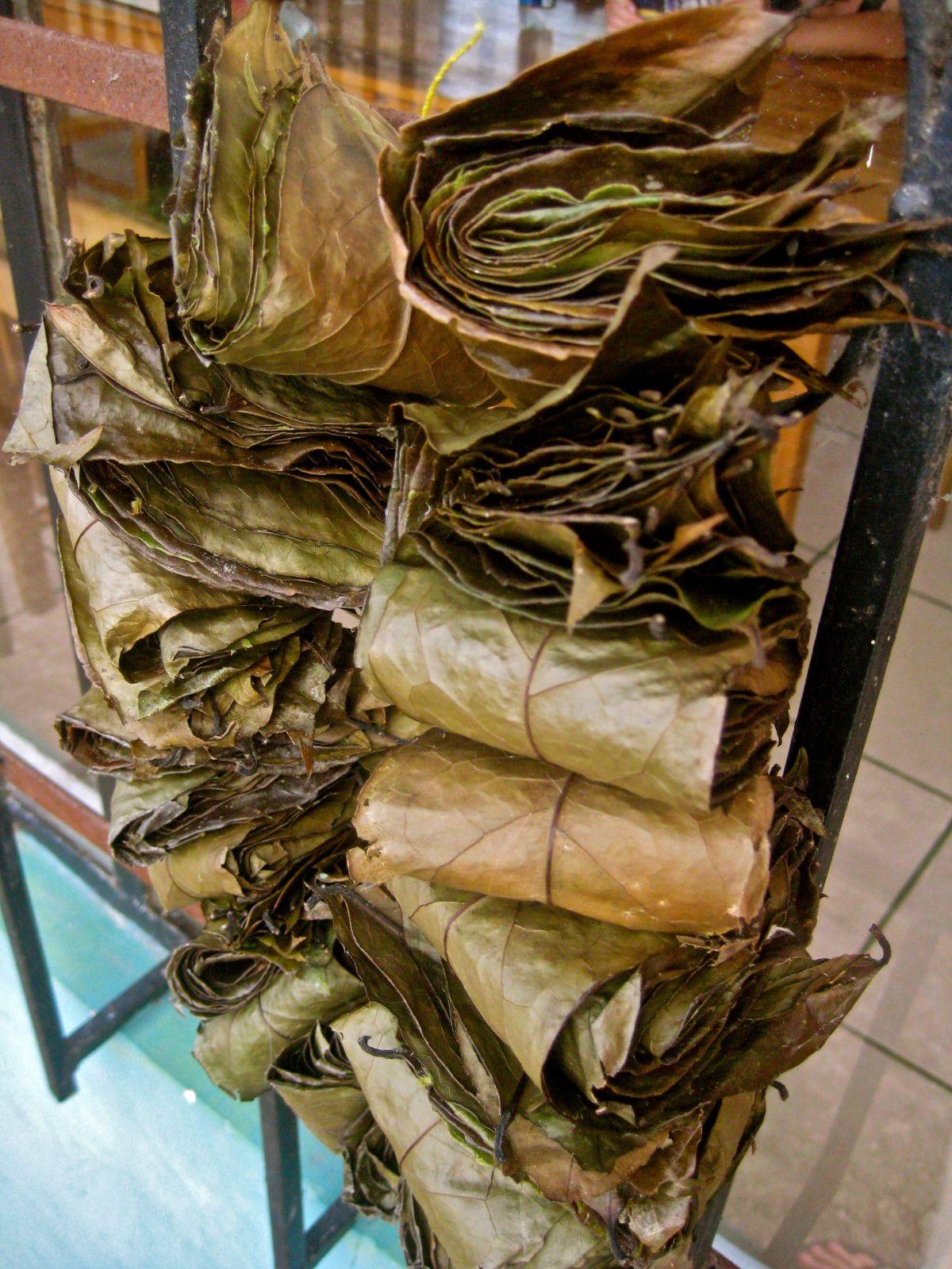 hojas de guayusa secas para infusión