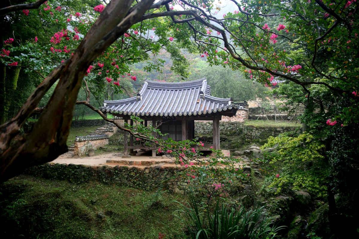 Tés verdes de Corea: Woojeon