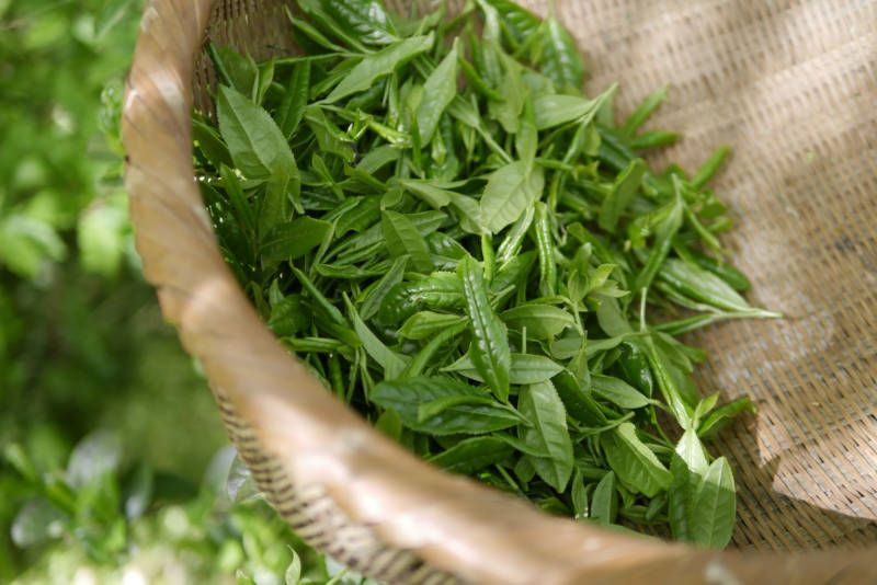 té verde coreano