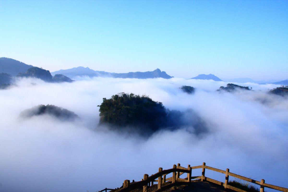 Da Hong Pao, el té de los árboles milenarios