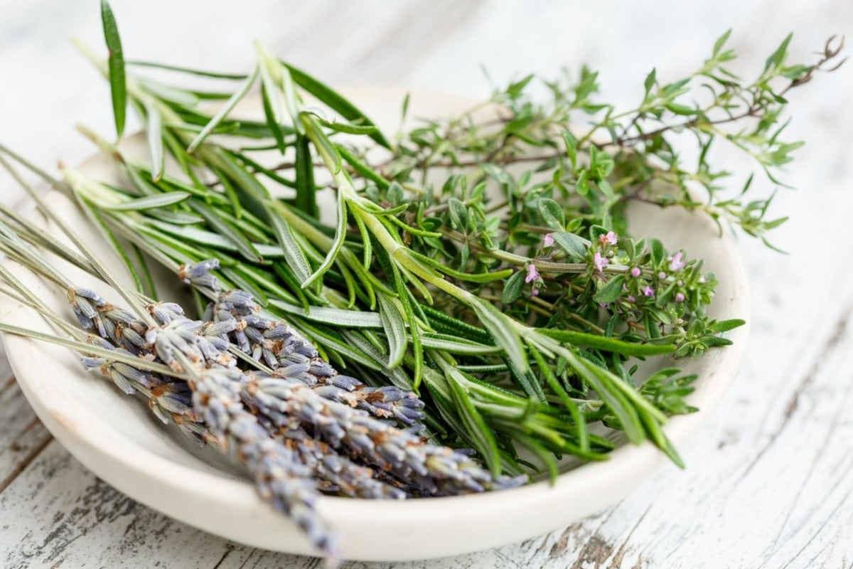 romero y otras hierbas medicinales