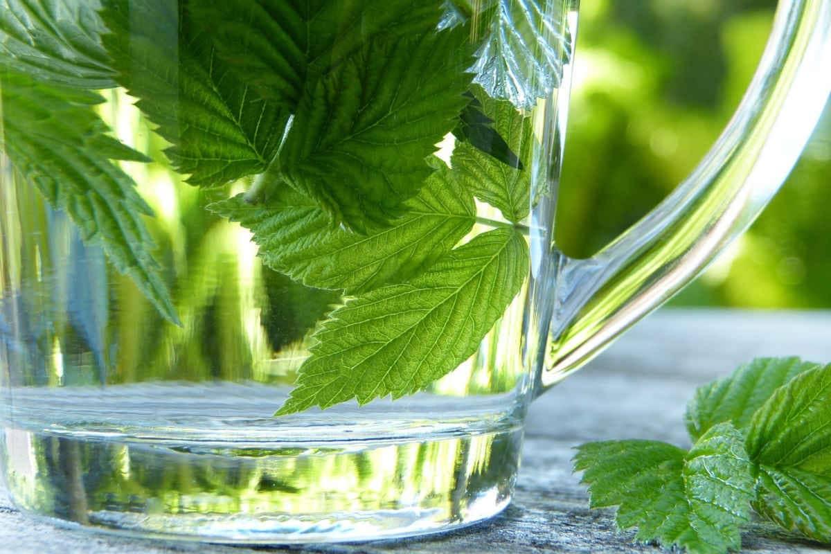 taza con hojas de frambuesa