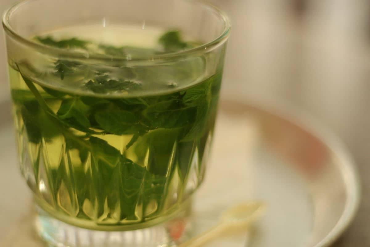 té de albahaca