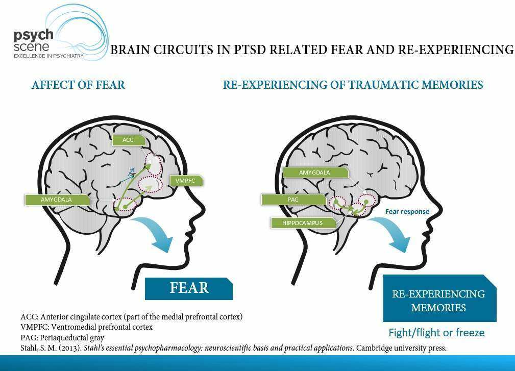 Diagram depicting brain circuits in PTSD relating to fear and re-experiencing.
